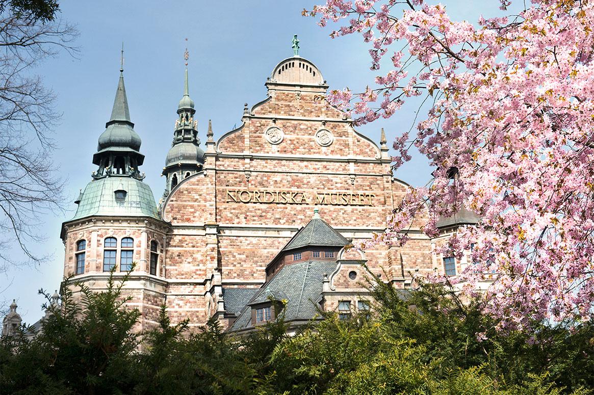 Nordiska museets fasad under körsbärsblommning.